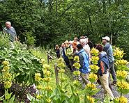Botanischer Garten Gentiana