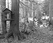 Gasserenweid–Jaun (Jaunpass)