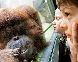 Basler Zoo