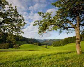 Naturpark_Thal_Hauberg_6_M.jpg