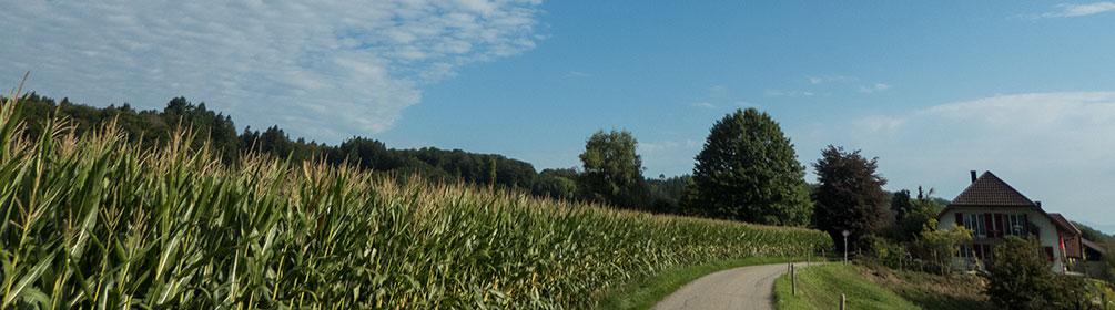 802 Wasseramt-Route
