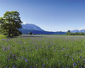 Liechtensteiner Panoramaweg